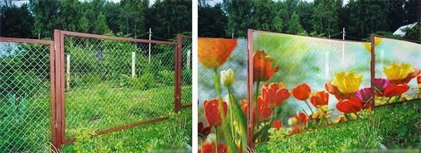 Красивый забор из сетки рабицы фото