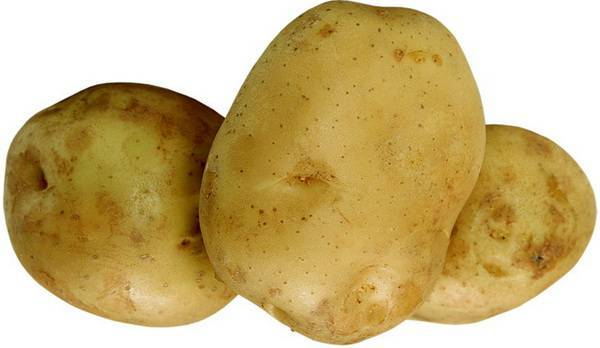 Картофель буррен описание сорта фото