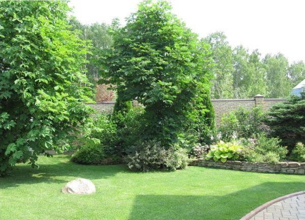 Красивые деревья для дачи