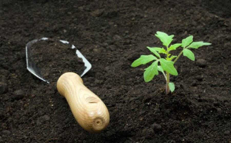 Из приведенного перечня выберите тип почвы
