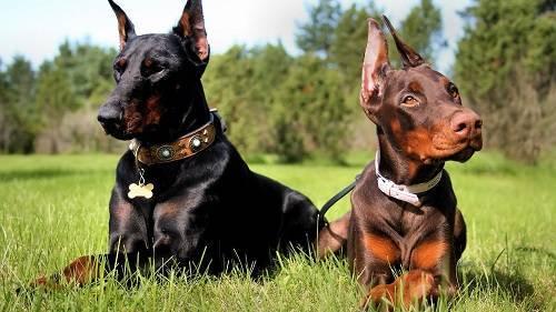 Породы собак для содержания на улице