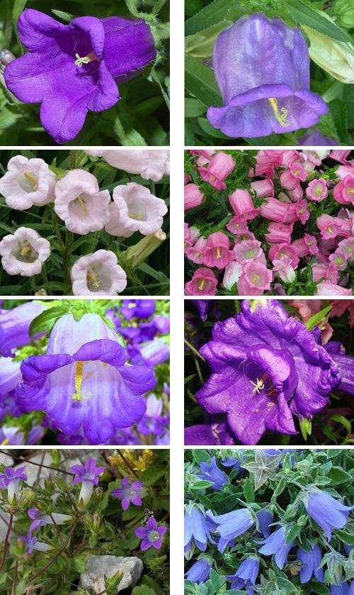 Цветы однолетники цветущие все лето название фото