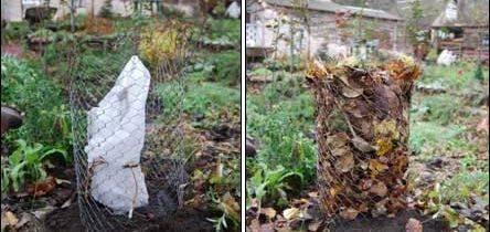 Осенний уход за гортензией