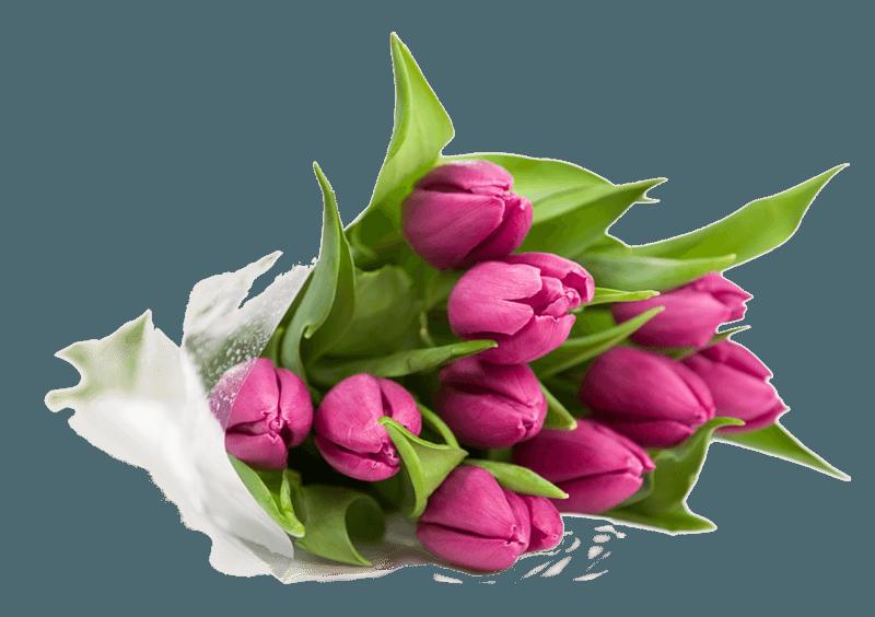 Как вырастить луковицу тюльпана