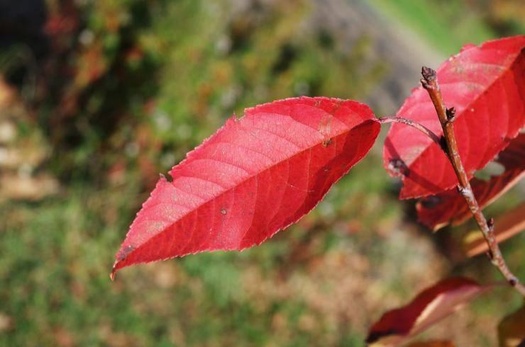 Чем обрабатывать деревья осенью от вредителей