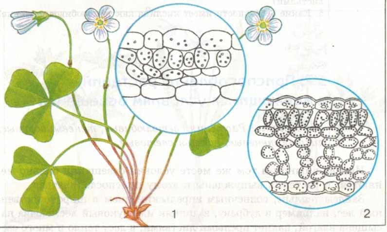 Тенелюбивые растения в лесу