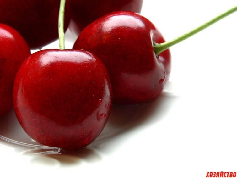 Какая вишня самая вкусная и сладкая