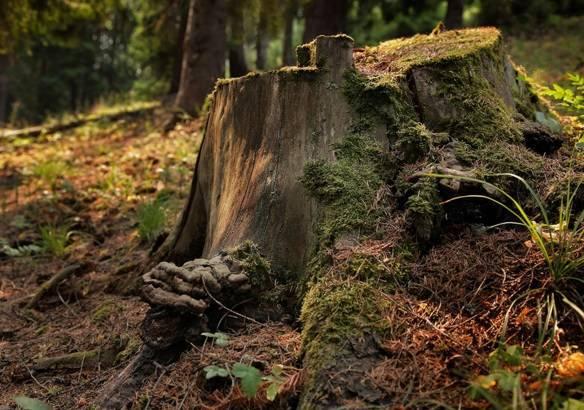 Удаление пней деревьев