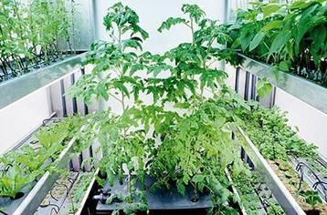 Что можно выращивать на гидропонной установке