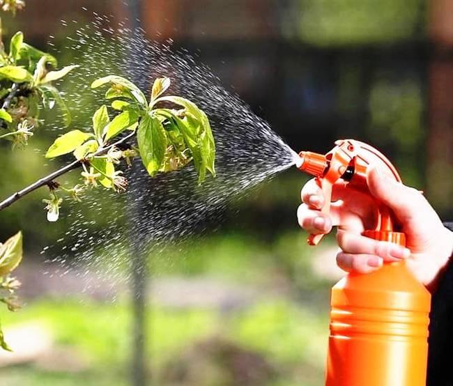 Как избавиться от тли в огороде