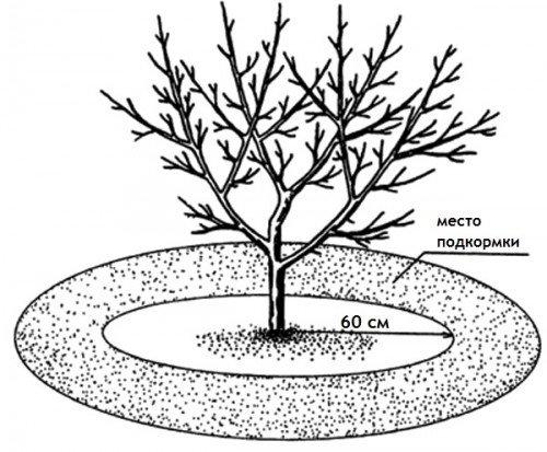 Сколько золы вносить в почву