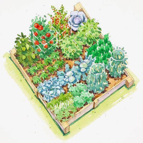 Смешанные посадки совместимых овощей схемы