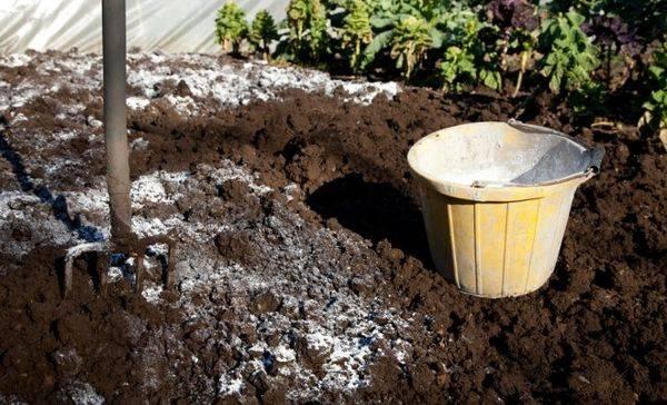 Как обеззаразить землю на огороде
