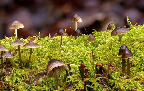 Сообщение о съедобных и несъедобных грибах