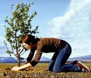 Как сажать саженцы плодовых деревьев весной
