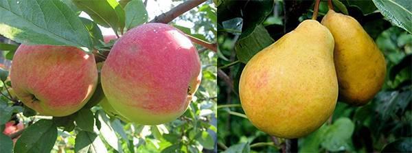 Как правильно посадить яблоню весной схема