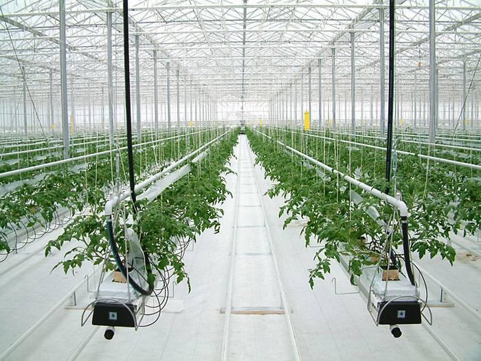 Гидропонный метод выращивания растений