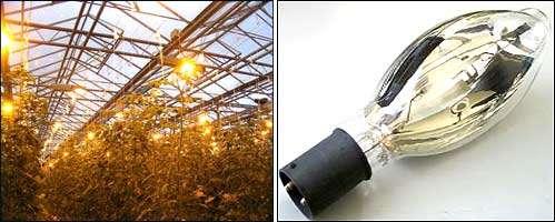 Лампы для досвечивания растений