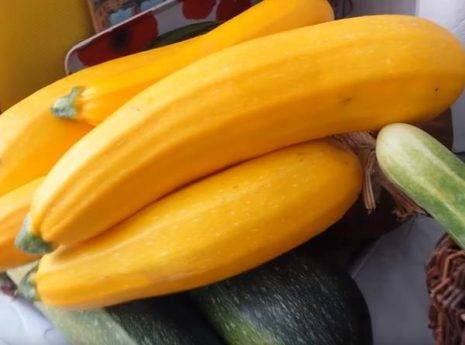 Кабачки желтые сорта