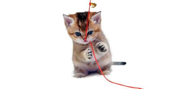 Что нужно чтобы завести котенка
