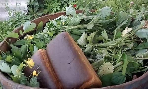 Удобрение из крапивы для растений