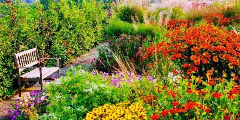 Клумба цветущая все лето как составить