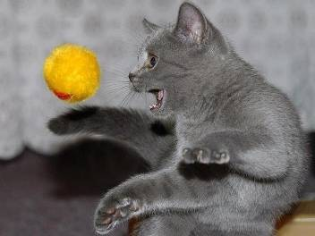 Решили завести котенка с чего начать