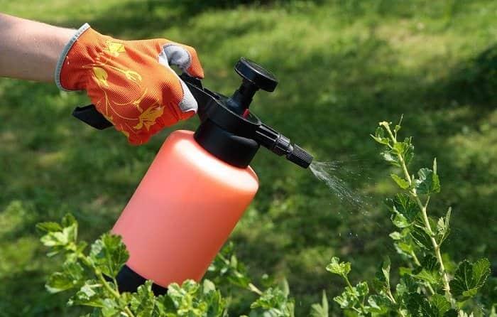 Защита зеленью