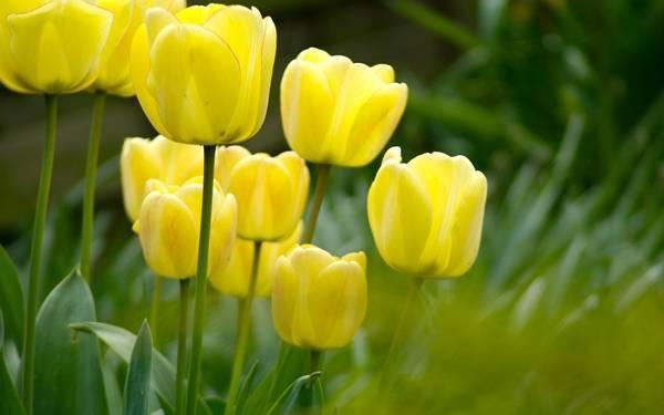 Трава с желтыми цветами фото