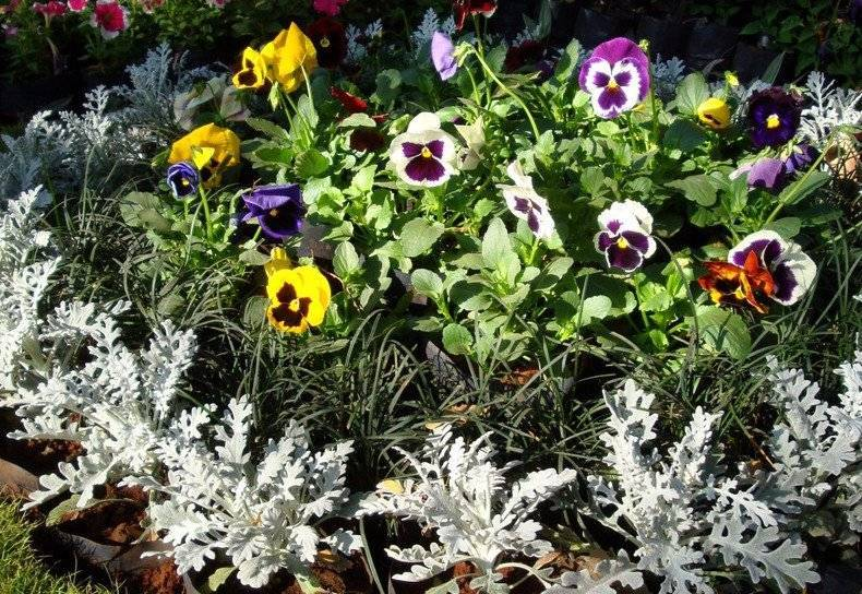 Сорта цветов для клумб