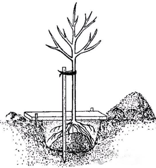 Как спланировать сад на участке