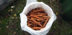 Как правильно хранить морковь на зиму