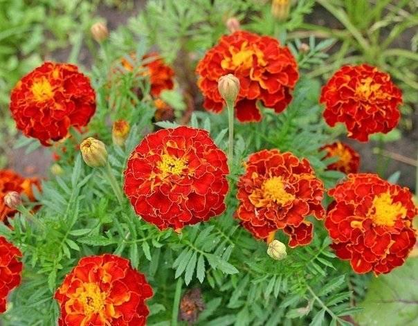 Какие цветы можно посадить под зиму семенами