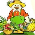 При какой температуре хранить капусту