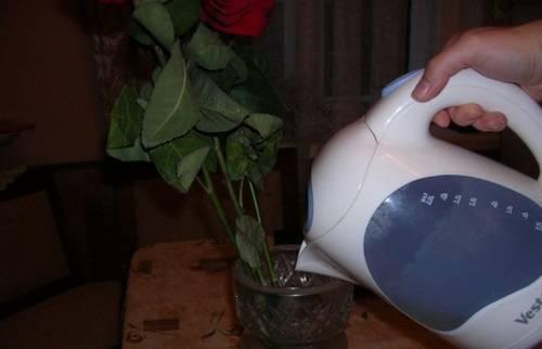 Чтобы цветы долго стояли в вазе розы