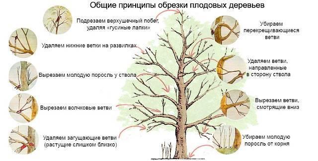 Как правильно садить деревья осенью
