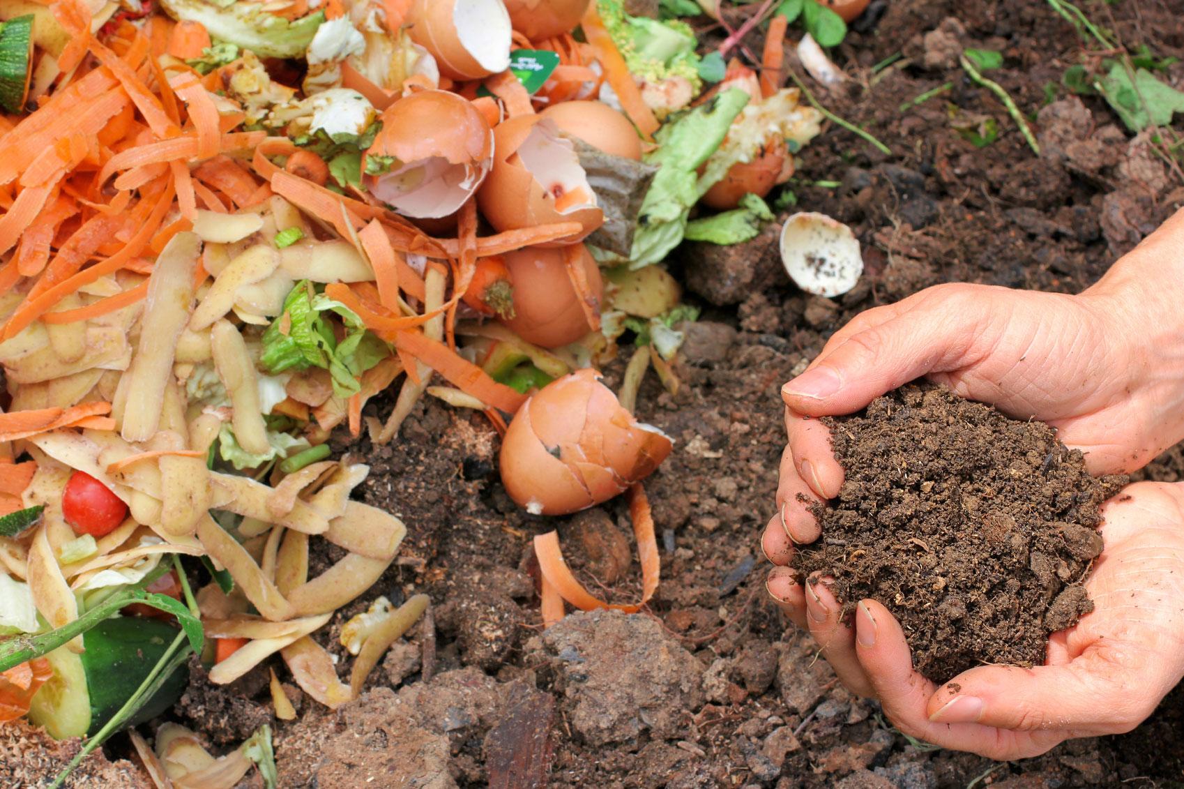 Чем отличается компост от перегноя