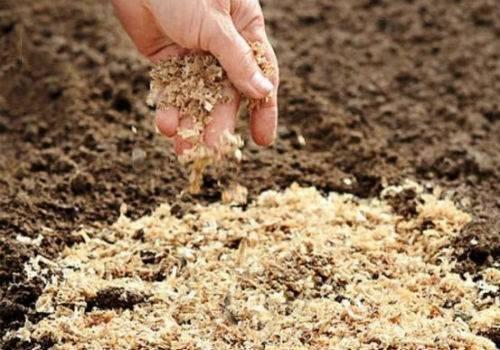 Опилки для мульчирования почвы