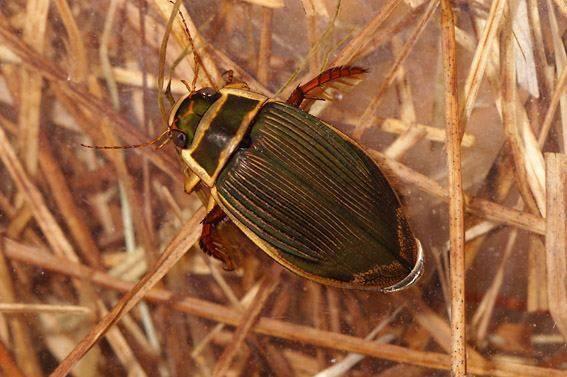 Какие бывают жуки название и фото