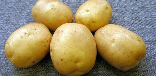 Красная картошка для варки или жарки