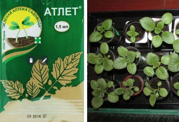 Стимулятор роста растений атлет
