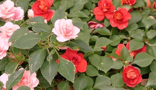 Растения для северной стороны дома