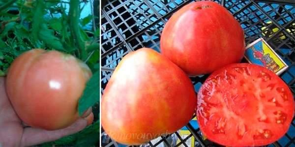 Как часто поливать помидоры в теплице