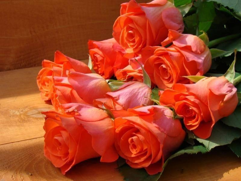 Как сажать розы черенками осенью