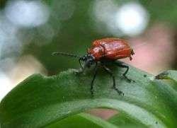 Инсектициды системного действия