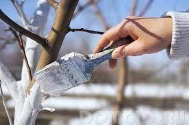 Можно ли белить деревья известью