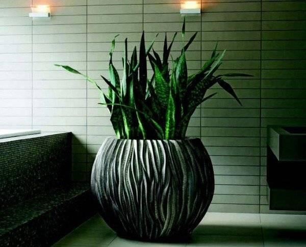 Комнатные растения которые не любят свет