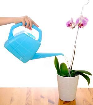 Глауксин для растений