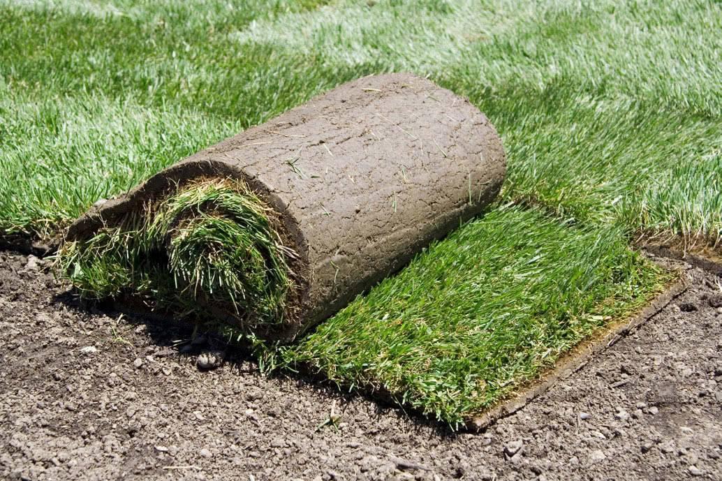 Подготовка газона к зиме в сибири
