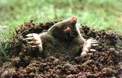 Что не входит в состав почвы